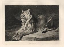 "Auguste Andre Lancon ""Lion"" original etching"
