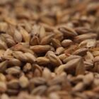 Gambrinus Honey Malt 5 lb for Home Brew Beer Making