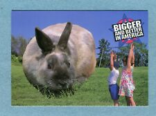 """A8265 Postcard """"Bigger and Better In America"""" Children With A Very Large Rabbit"""