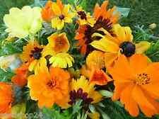 Sommerblumenmischung Traumgarten in Gelb Orange Töne Samen  Blumenwiese Saatgut
