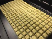 "Grodan 1"" AO Rockwool Starter Plugs Cubes 200 count - hydroponic aquaponic media"