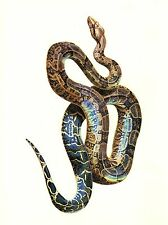 "1977 VINTAGE LAROUSSE ""BOA CONSTICTOR"" STUNNING SNAKE COLOR Art Print Lithograph"