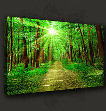 SUNRAYS IN GREEN FOREST LANDSCAPE CANVAS WALL ART PRINT PICTURE READY TO HANG