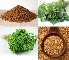 100 / 500 Graines BIO de Fenugrec / Trigonella Foenum Graecum / Organique Methi