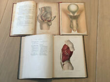 3 Antique books with popup of male and female anatomy body and genitals gay int.