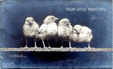 1905 Four Little Roosters Chicks Chickens Rotograph Real Photo Postcard BF