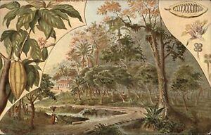 Cocoa Fruits trees ~ Puerto Rico ~ postcard sku113
