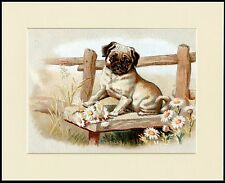 PUG LOVELY LITTLE DOG AND FLOWERS PRINT MOUNTED READY TO FRAME