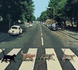 "Abby Road Cats Walking Crosswalk Meow Tails Kitties Pet Funny 2.5"" Cool Sticker"