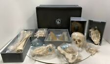 NEW SOMSO SEIT 1876 Unmounted Human Skeleton Skull WITH CARRYING CASE