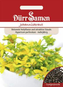 Johanniskraut Heilpflanze Staude mehrjährig Samen Wildkraut Räucherpflanze Kopf