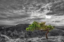 Bilder Wandbild Keilrahmen Leinwand Bäume schwarz weiß Gräser Art.609957
