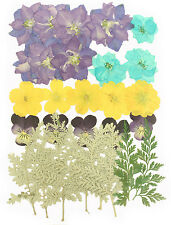 pressed flowers, larkspur, pansy, evening primrose, foliage for floral art craft