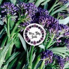 BROKKOLI Broccolisamen 100 Samen alte Sorte Sprossenbrokkoli LILA Bio Broccolett