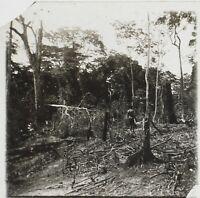 Africa Plantation Congo Foto NE17 Placca Da Lente Stereo Vintage Ca 1910