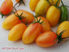 Tomato Artisan Blush Tiger 50 seeds ORGANIC / NON GMO