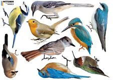Aufkleber Sticker Vogel Vögel Wandaufkleber Wandsticker Bird Fenster Deko Tattoo