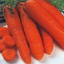 Vegetal Zanahoria Otoño Rey 2 aprox 2,500 Semillas - 3 gramos