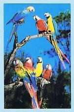 UNUSED KOPPEL PHOTOCHROME POSTCARD FG-112 - PARROT JUNGLE, MIAMI, FLORIDA