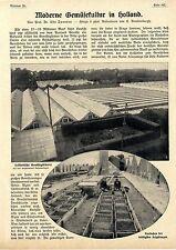 Prof. DR. Udo Dammer moderne ortaggi cultura in Olanda testo & immagine documento del 1911