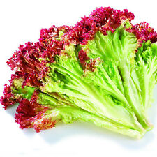 100 Lettuce Seeds Red Leaf Lactuca Sativa Organic Vegetables C008