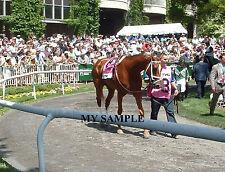 MY MISS SOPHIA 8 by 10 PHOTO 2014 THE ACORN Horse Race BELMONT PARK #1