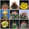 20 semi in miscuglio di Hamatocactus mix ,piante grasse,seed cactus mix