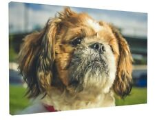 CUTE CAVALIER KING CHARLES SPANIEL CANVAS PICTURE PRINT CHUNKY FRAME LARGE #3388