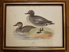Original Framed Antique Hand Colored Print Teal Duck by Grafiche Tassotti Italy