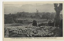 New Zealand, Typical Pastoral Scene Finest Lamb in The World Postcard, B244
