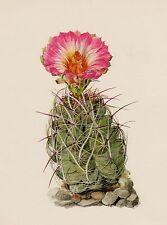 Cactus Print Vintage Botanical Print Beautiful Art Straw Spine Cactus #2686