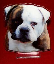 statuette photosculptée 10x15 cm chien bouledogue americain 2 dog hund perro