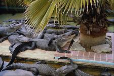562075Alligator Bay Everglades National Park A4 Photo Print