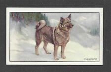 1936 Uk Dog Art Full Body Portrait Gallaher Cigarette Card Norwegian Elkhound