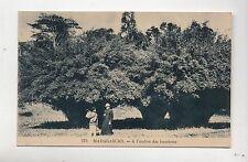 Carte postale MADAGASCAR. A l'ombre des bambous.