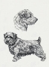 NORFOLK TERRIER CHARMING DOG GREETINGS NOTE CARD LOVELY SKETCH STUDY