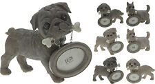 15cm Pug Westie King Charles Ornament with Mini Photo Frame Puppy Ornament Frame