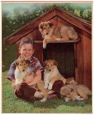Vintage Calendar Print Original Lithography C1950 Dogs Collie Doghouse Original