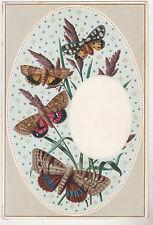 Vintage Butterfly Postcard,Beautful Butterflies,c.1909
