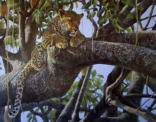 Vintage Art 1979 Leopard Sausage Tree Robert Bateman Barn Owl Church Yard Print