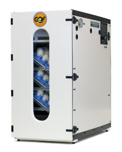 GQF 1202E Professional Cabinet Incubator Best Hatching Quail Chicken Duck Eggs