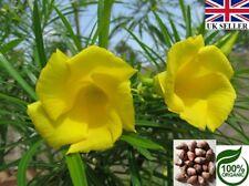 6 RARE SEEDS of Cascabela Thevetia Peruviana (Yellow Oleander) 100% ORGANIC-UK