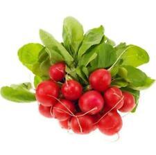 200 pcs vegetable Seeds red Cherry radish