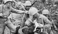 WW2 Photo WWII US Marines Okinawa with Baby Goat World War Two  / 1232