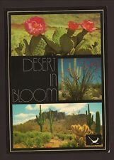 1984 Desert in Bloom Postcard--Phoenix, Arizona
