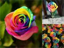 20 Rainbow Rose Seeds Garden Gift Flower Rare Premium Striped Garden