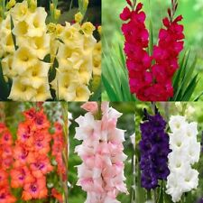 H2 (1 to 5 ° C) Hardiness Perennial Flower & Plant Seeds