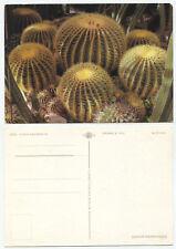 43592 - Echinocactus grusonii - Kakteen - alte Ansichtskarte