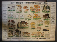 Schlitzberger Große lithografische Pilztafel um 1890 Mykologie Natur Wissen sf