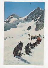 Jungfraujoch Polarhunde Switzerland Old Postcard 378a